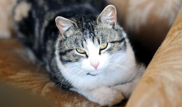 33eb52e08e1f Απίστευτο  Οι Γάτες θέλουν να Σκοτώσουν τους Ανθρώπους