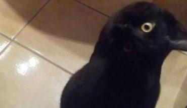 teen παίρνει μεγάλο μαύρο πουλί
