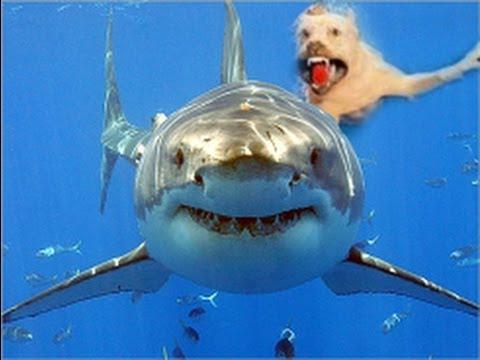 καρχαρια