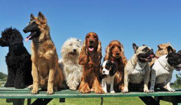 σκύλων