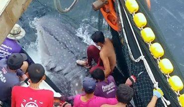 Ατρόμητος ψαράς «καβαλάει» καρχαρία 10 τόνων! | Δείτε το ΒΙΝΤΕΟ