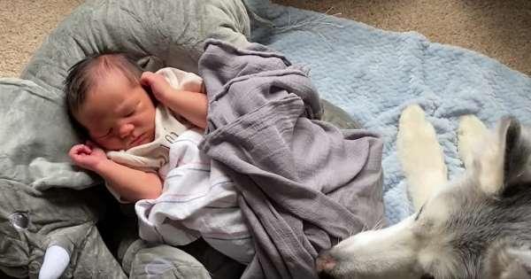 Συγκινητικό: Σκύλαρος στέκεται ακοίμητος φρουρός σε νεογέννητο | ΒΙΝΤΕΟ