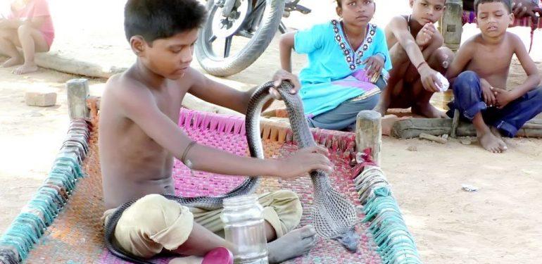9χρονος ζει, τρώει και κοιμάται μαζί με δηλητηριώδη φίδια!   ΒΙΝΤΕΟ
