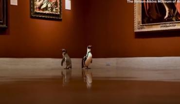 πιγκουίνους
