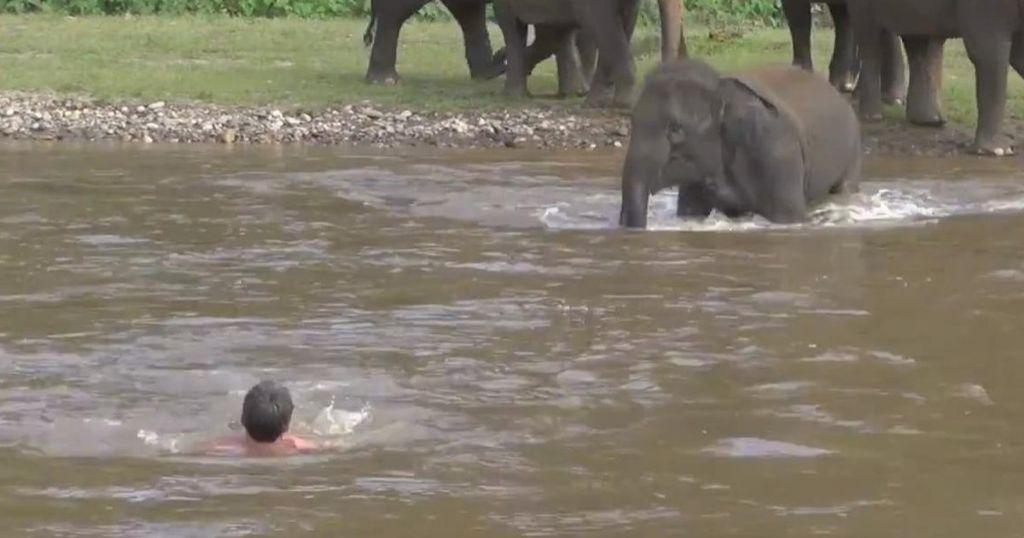Ελέφαντας σώζει άντρα από «σίγουρο» πνιγμό! | ΒΙΝΤΕΟ
