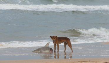 Ατρόμητος σκύλαρος τα βάζει με... καρχαρίες! | ΒΙΝΤΕΟ