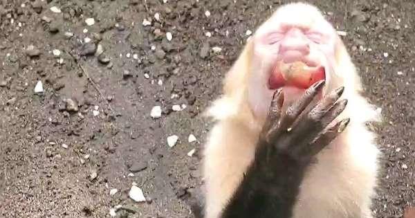 Τρομερή μαϊμού παρακαλάει τουρίστες να την... φιλέψουν λιχουδιές! | ΒΙΝΤΕΟ