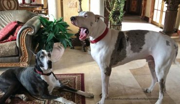 Σκύλαρος δίνει «ρεσιτάλ γκρίνιας» για να βγεί στον κήπο! | ΒΙΝΤΕΟ