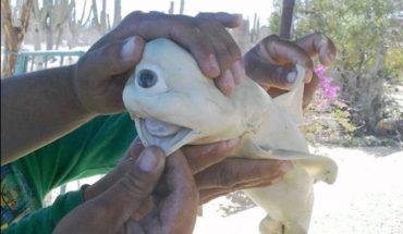 Καρχαρίας-τέρας χωρίς μύτη και ένα μόνο μάτι ξεβράστηκε στο Μεξικό! | ΒΙΝΤΕΟ