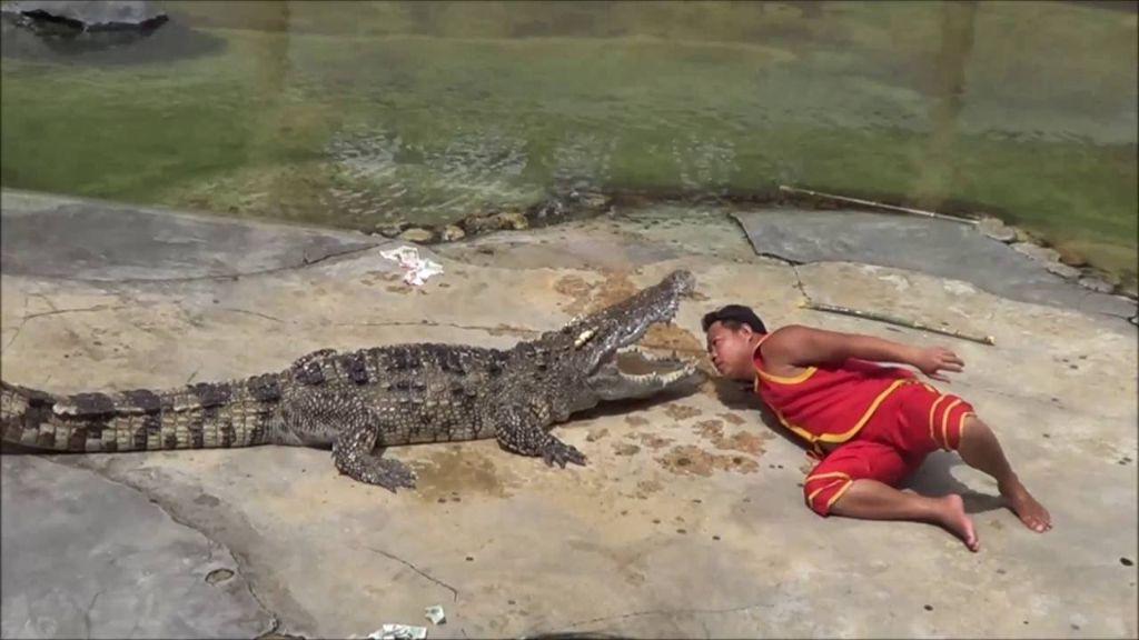 Σκληρές εικόνες: Κροκόδειλος δαγκώνει θηριοδαμαστή στο κεφάλι! | ΒΙΝΤΕΟ