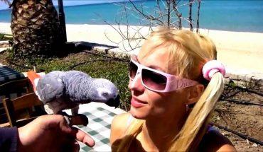 Αγαπησιάρης παπαγάλος τρελαίνει στα φιλιά την αφεντικίνα του! | ΒΙΝΤΕΟ
