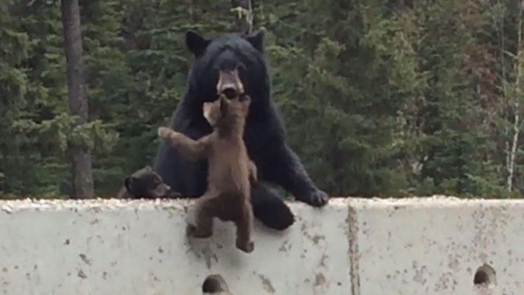 αρκούδα αρκουδάκι