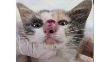 Εγχείρησαν γατάκι και ΔΕΝ θα πιστεύετε τι βρήκαν στη μύτη του! | ΒΙΝΤΕΟ