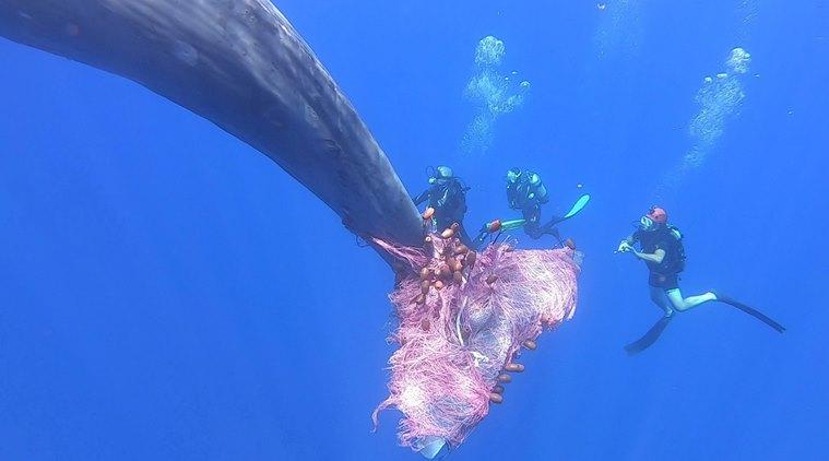 Απίστευτο: Το Λιμενικό έσωσε φάλαινα-φυσητήρα από σίγουρο πνιγμό! | ΒΙΝΤΕΟ