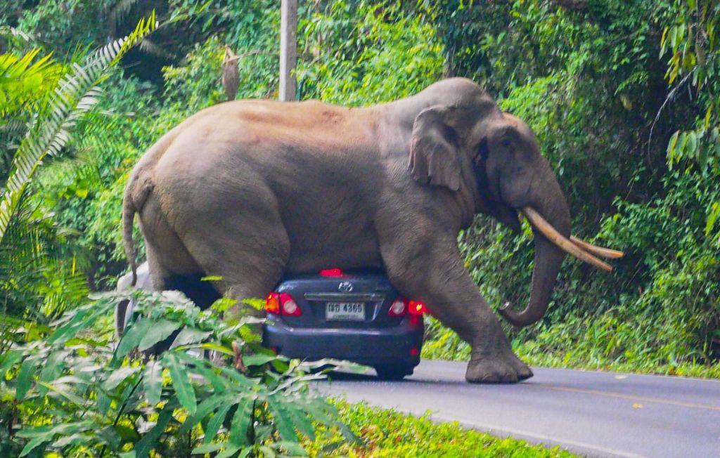 Επικό βίντεο: Ελέφαντας ΤΣΑΚΙΖΕΙ τζιπ με μία μόνο κίνηση! | ΒΙΝΤΕΟ