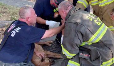 Πυροσβέστες σώζουν τη ζωή ενός σκύλου με τεχνητή αναπνοή! | ΒΙΝΤΕΟ