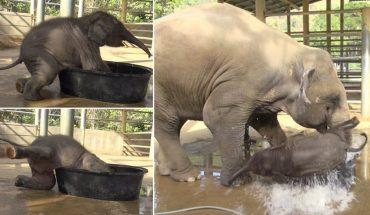 Τρελά γέλια: Ατσούμπαλο ελεφαντάκι δεν μπορεί να... σταθεί στα πόδια του! | ΒΙΝΤΕΟ