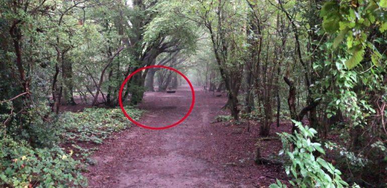 Ανατριχίλα: «Φάντασμα» κάνει κούνια σε σκοτεινό δάσος! | ΒΙΝΤΕΟ