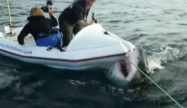 Τρόμος: Καρχαρίας παίρνει στο κυνήγι βάρκα με τουρίστες! | ΒΙΝΤΕΟ