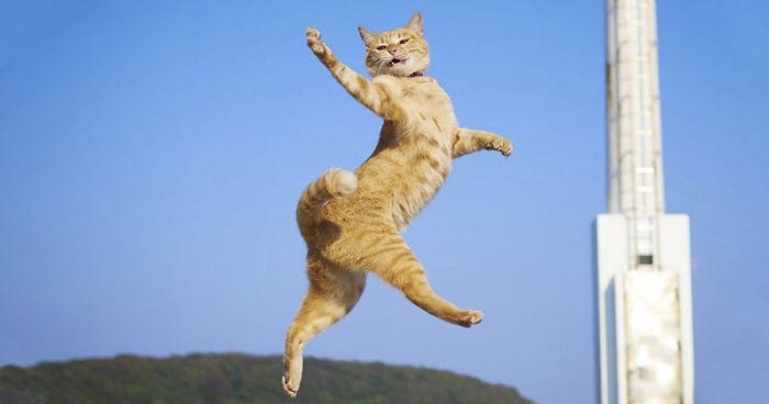 Δείτε τη γάτα που γκρέμισε το ίντερνετ παίζοντας... ΚΑΡΑΤΕ!| ΒΙΝΤΕΟ