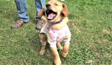 Τρισχαριτωμένο κουτάβι φοράει... πιτζάμες και ρίχνει το ίντερνετ! | ΒΙΝΤΕΟ