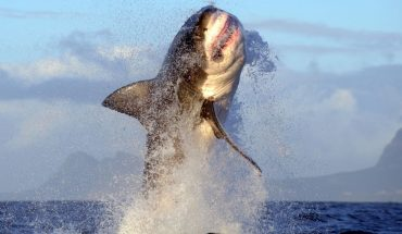 Δαιμονισμένος καρχαρίας πηδάει 2 μέτρα πάνω από το νερό! | ΒΙΝΤΕΟ