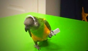 Αυτός ο παπαγάλος μας... κούφανε με όσα λέει το στόμα του! | ΒΙΝΤΕΟ