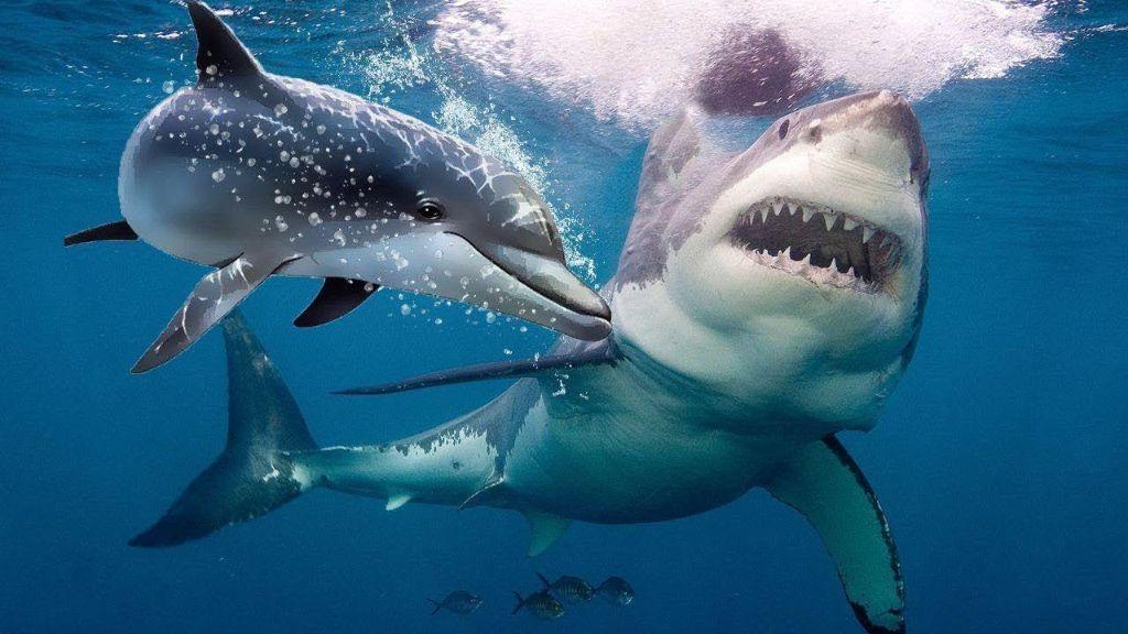 Δελφίνια σώζουν ψαράδες από τα δόντιά λευκού καρχαρία! | ΒΙΝΤΕΟ