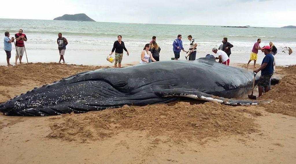 Δείτε τι σκαρφίστηκαν για να σώσουν φάλαινα από βέβαιο θάνατο! | ΒΙΝΤΕΟ