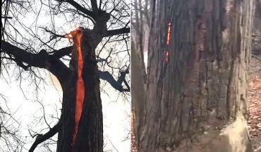Θαύμα: Δέντρο παίρνει φωτιά αλλά ΔΕΝ καίγεται! | ΒΙΝΤΕΟ