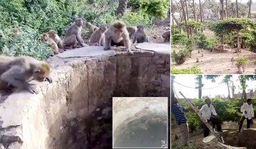 Αδιανόητο: Μαϊμούδες σώζουν λεοπάρδαλη που πνίγεται σε πηγάδι! | ΒΙΝΤΕΟ