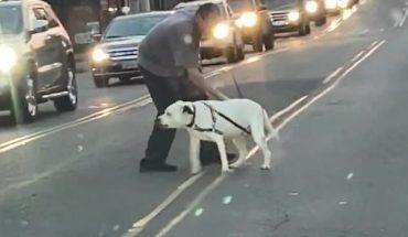 Σκύλος με «γαϊδουρινή» συμπεριφορά προκαλεί μποτιλίαρισμα! | ΒΙΝΤΕΟ
