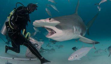 Τρόμος: Κολυμπούσαν όταν έπεσαν πάνω σε... δεκάδες καρχαρίες! | ΒΙΝΤΕΟ