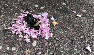 Μυρμήγκια «κηδεύουν» μέλισσα αφήνοντας λουλούδια στο μνήμα της! | ΒΙΝΤΕΟ