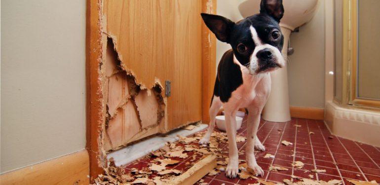Δείτε τι έκανε αυτός ο τρελιάρης σκύλος και θα... ΠΑΛΑΒΩΣΕΤΕ! | ΒΙΝΤΕΟ