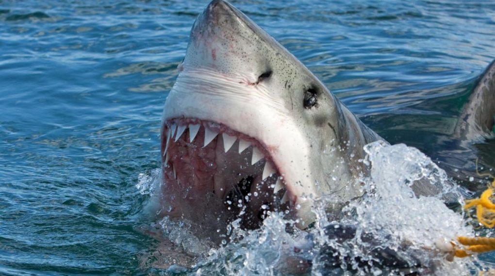 Τρόμος! Καρχαρίας κάνει μανιασμένη επίθεση σε βάρκα | ΒΙΝΤΕΟ