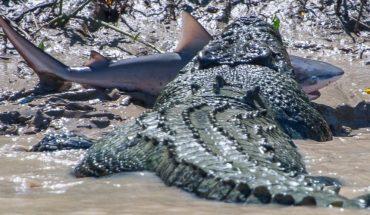 Κροκόδειλος ΤΣΑΚΙΖΕΙ καρχαρία με μία μόνο κίνηση! | ΒΙΝΤΕΟ