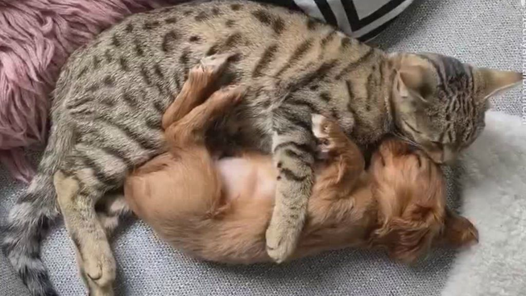 Γάτα κάνει ΤΡΕΛΕΣ αγκαλιές σε κουταβάκι και ρίχνει το ίντερνετ! | ΒΙΝΤΕΟ
