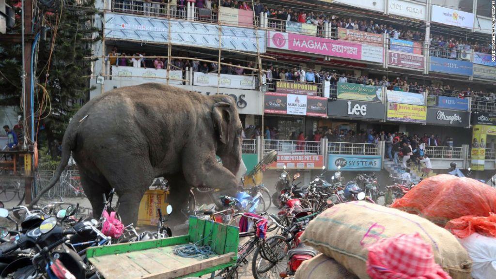 Ελέφαντας τα παίρνει κρανίο και τα κάνει όλα ΟΠΑ! | ΒΙΝΤΕΟ