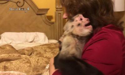 Μαϊμουδίτσα κάνει σαν ΤΡΕΛΗ όταν βλέπει την αφεντικίνα της! | ΒΙΝΤΕΟ