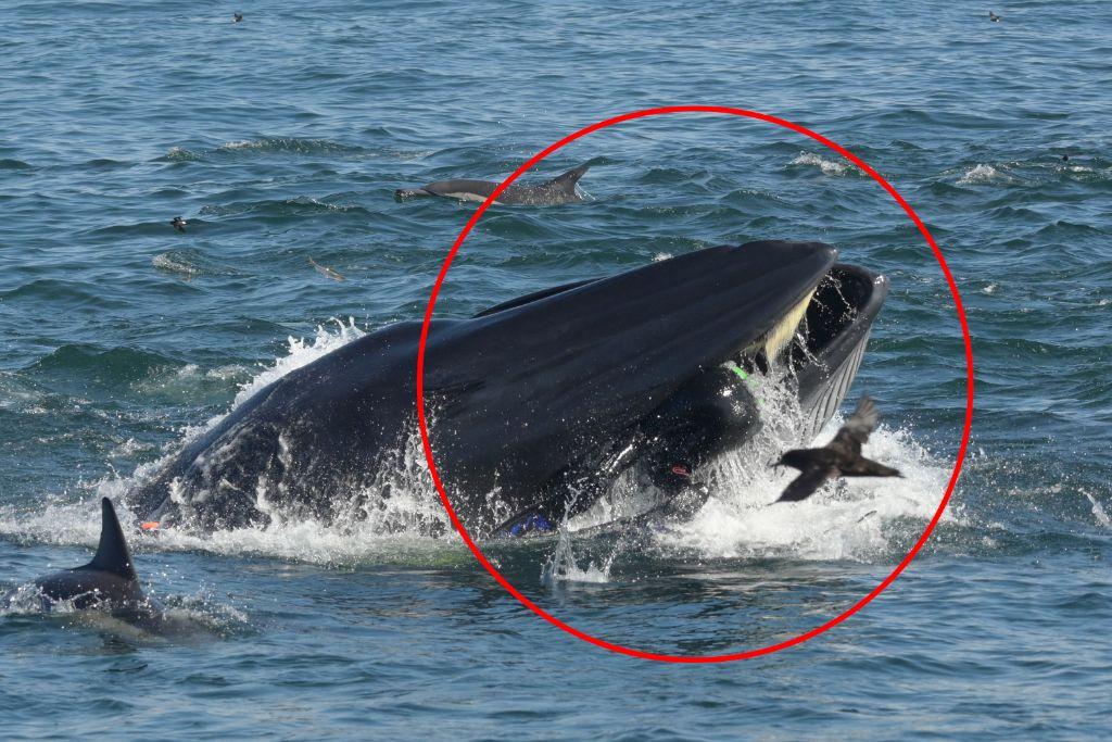 Φάλαινα καταπίνει ζωντανό και αμασήτο έναν δύτη! | ΒΙΝΤΕΟ