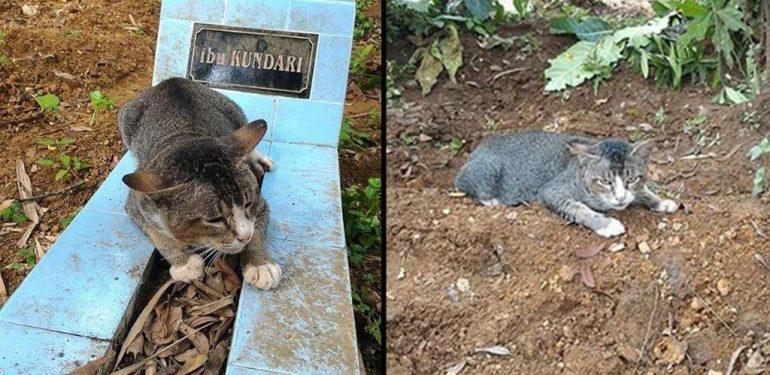 Ανατριχίλα: Γάτα θρηνεί πάνω από το μνήμα του αφεντικού της! | ΒΙΝΤΕΟ