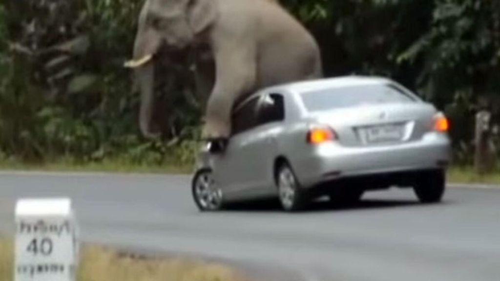 Εξαγριωμένο κοπάδι ελεφάντων «παίρνει σβάρνα» αυτοκίνητα! | ΒΙΝΤΕΟ [προσχεδιο]