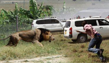 Δείτε τι κάνουν τα εξαγριωμένα λιοντάρια σε αυτό το τζιπ! | ΒΙΝΤΕΟ