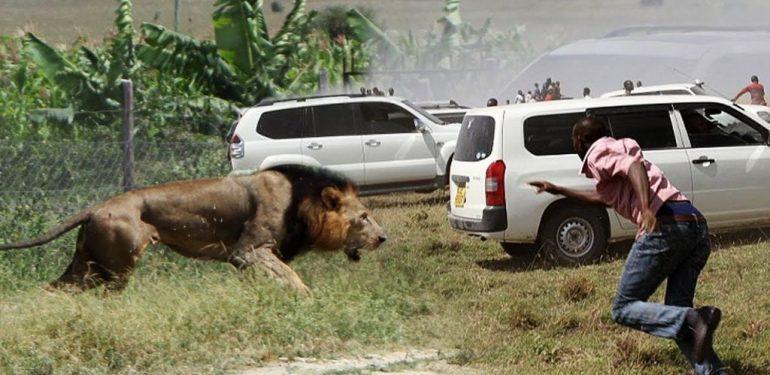 Δείτε τι κάνουν τα εξαγριωμένα λιοντάρια σε αυτό το τζιπ!   ΒΙΝΤΕΟ