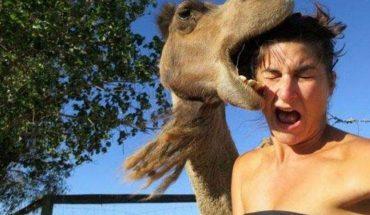 Τρελά γέλια: Τα ζώα περνούν στην... αντεπίθεση! | ΒΙΝΤΕΟ