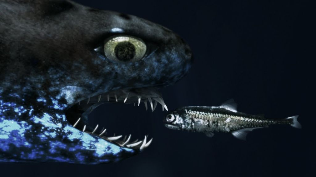 Δείτε τον καρχαρία που μοιάζει με ΕΞΩΓΗΙΝΟ ΤΕΡΑΣ! | ΒΙΝΤΕΟ