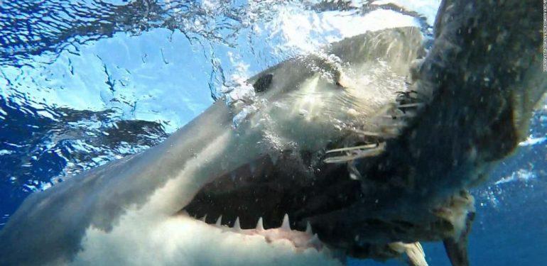 Τρόμος: Καρχαρίας την «πέφτει» άγρια σε τζετ-σκι! | ΒΙΝΤΕΟ