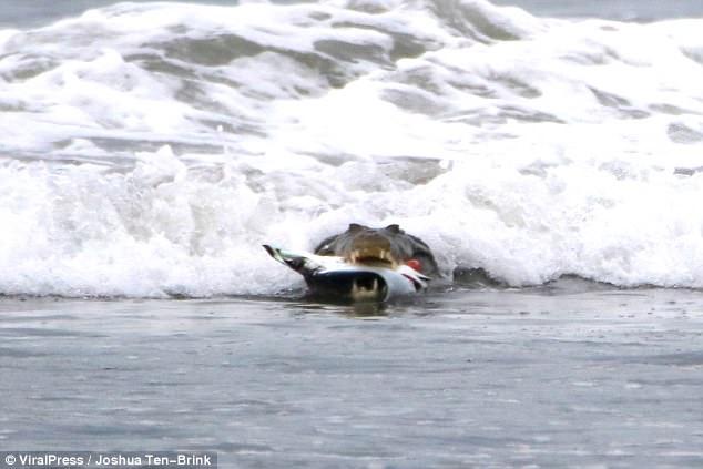 Σκληρές εικόνες: Κροκόδειλος ΤΣΑΚΙΖΕΙ δηλητηριώδες σαλάχι!   ΒΙΝΤΕΟ