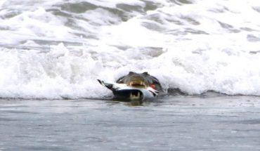 Σκληρές εικόνες: Κροκόδειλος ΤΣΑΚΙΖΕΙ δηλητηριώδες σαλάχι! | ΒΙΝΤΕΟ